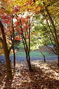 Autumn Landscape Prints - Fall forest Print by Les Cunliffe