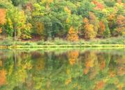 Nature Study Prints - Fall Forest Reflection Print by Joshua Bales