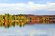 Canada Photos - Fall forest reflections by Elena Elisseeva