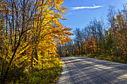 Autumn Trees Prints - Fall forest road Print by Elena Elisseeva