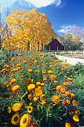 State Flowers Prints - Fall Garden in Jockey Hollow Historic Park New Jersey Print by George Oze