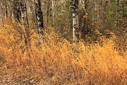 Fall Scenes Photo Originals - Fall Grasses 1 by Roland Stanke