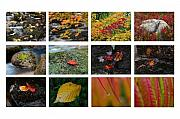 Leaf Prints - Fall Greetings Print by Juergen Roth