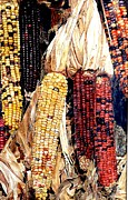 Corn Paintings - Fall Harvest by Rita Fors