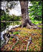 Fall Pyrography Metal Prints - Fall in Audubon Park Metal Print by Ray Devlin