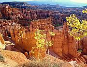 Utah National Parks Prints - Fall in Bryce Canyon Print by Marty Koch