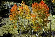 Marty Koch Prints - Fall In Colorado Print by Marty Koch