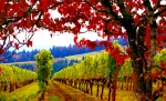 Vineyards Prints - Fall in Dundee Print by Margaret Hood