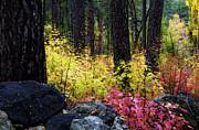 Saija  Lehtonen - Fall in Full Color
