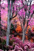 Fall Leaves Posters - Fall in Pink Poster by Emily Stauring
