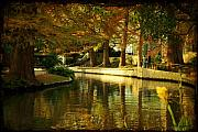 Cypress Trees Photos - Fall in San Antonio by Iris Greenwell
