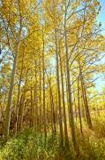 Colorado Greeting Cards Originals - Fall in St Varin Co by James Steele