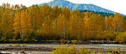 Foliage Photographs Prints - Fall in the mountains Print by Robert  Torkomian