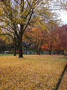 Absolute Photography - Fall in the park