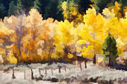 Aspen Framed Prints - Fall in the Sierra Framed Print by Carol Leigh