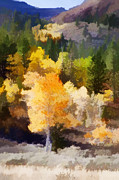 Painterly Photos - Fall in the Sierra IV by Carol Leigh
