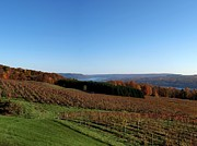 Finger Lake Framed Prints - Fall in the Vineyards Framed Print by Joshua House