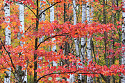 Northwoods Photos - Fall Layers by Adam Pender