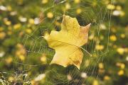 Ground Level View Posters - Fall Leaf In A Spider Web Poster by Craig Tuttle