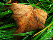 Dewdrops Digital Art Posters - Fall Leaf Poster by Wolfgang Karl
