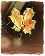 Fuad Azmat Art - Fall Leave3 by Fuad Azmat