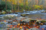 Flowing Stream Posters - Fall Leaves along Big Creek Poster by Alan Lenk