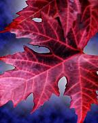 Red Maple Leaves Prints - Fall Leaves  Print by Cathy  Beharriell