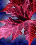 Cathy  Beharriell - Fall Leaves