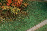 Autumn Views Prints - Fall Leaves Fall Onto Green Grass Print by Stephen Alvarez