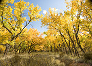 Shane Kelly - Fall Leaves in New Mexico