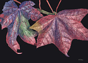 Scratchboard Paintings - Fall Leaves by Lynn Kibbe