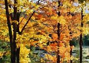Autumn Trees Pastels Prints - Fall Leaves Print by Russ Harris