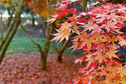 Fall Foliage Photos - Fall by Les Cunliffe