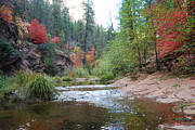 West Fork River Photos - Fall Licks Both Sides of the River by Heather Kirk