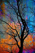 Winter Promise Prints - Fall Magic Print by David Clanton