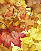 Warm Painting Posters - Fall Maple Leaves Poster by Christina Meeusen