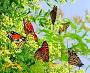 Monarch Metal Prints - Fall Migration Metal Print by Lisa Scott