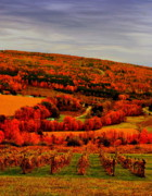 Fall Scenery Prints - Fall n Wine Print by Emily Stauring