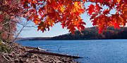 Deep River County Park Posters - Fall on Deep Creek Lake Poster by Neal Blizzard