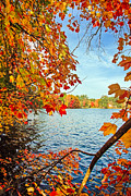 Maple Tree Posters - Fall on Lake Opechee Poster by Robert Clifford