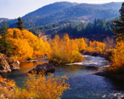 Fall Colors Photos - Fall on the Truckee River by Vance Fox