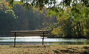Fall Trees Posters - Fall Park Bench and Ducks Poster by Anita Burgermeister