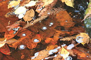Nathan Grisham - Fall Pool