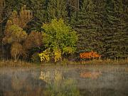 Fall Colors Art - Fall Reflections by Thomas Young