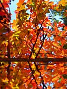 Landscape Digital Paintings - Fall Reflextion by Amy Vangsgard