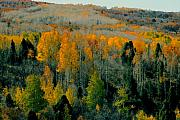 Utah Posters - Fall ridge Poster by David Lee Thompson