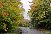 Adirondack Park Art - Fall Road in Upstate New York by Brendan Reals