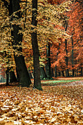 Autumn Leaf Prints - Fall Scenery Print by Hannes Cmarits