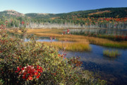Birch Lake Prints - Fall Scenic at Upper Hadlock Pond Print by George Oze