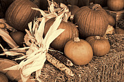 Pumpkins Pyrography - Fall Season Display - Sepia by Linda Phelps